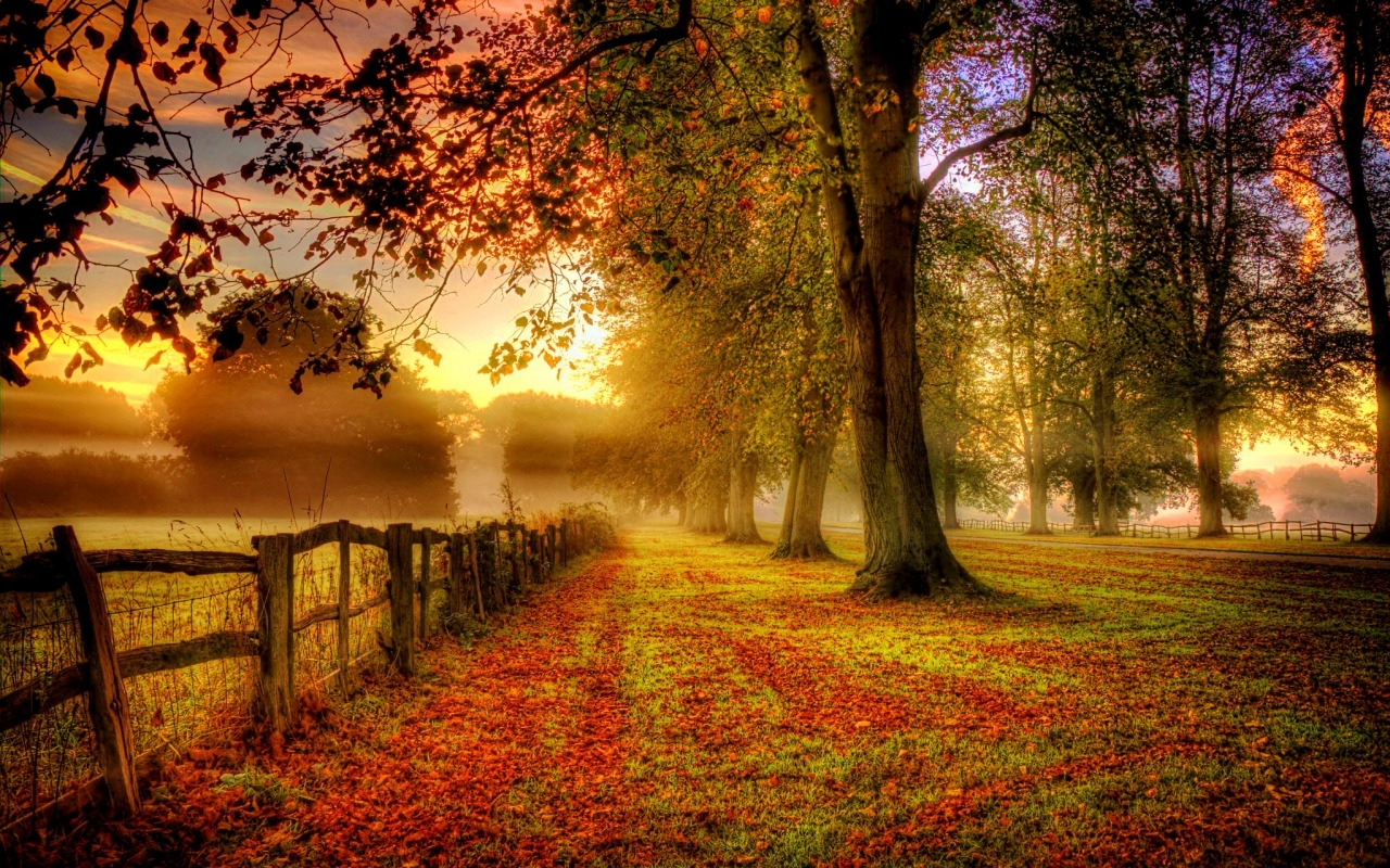 Cute Good Morning Wallpaper With Quotes Misty Fall Day Pictures Photos And Images For Facebook