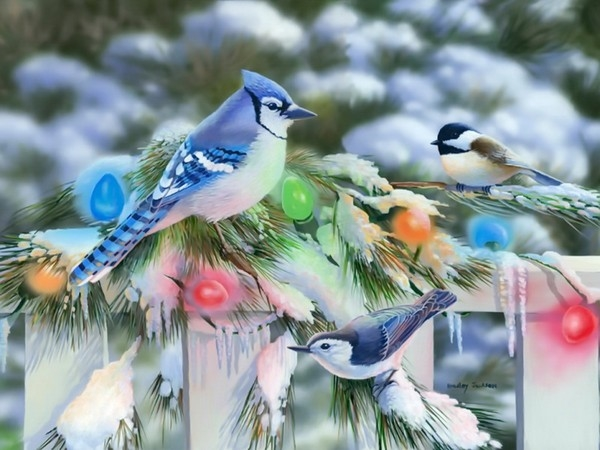 Life Magazine Quote Wallpapers Hd Birds At Christmas Pictures Photos And Images For