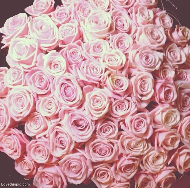 pretty pink roses pictures