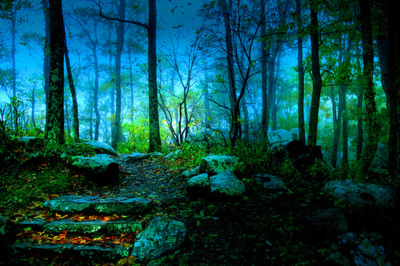 Life Magazine Quote Wallpapers Hd Forest Night Pictures Photos And Images For Facebook