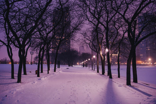 Cute St Patricks Day Wallpaper Reflecting Purple Snow Pictures Photos And Images For