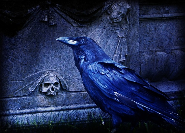 Cute Witchy Wallpapers Night Raven Pictures Photos And Images For Facebook