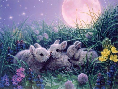 Three Sweet Little Bunnies By Kirk Reinhert Pictures