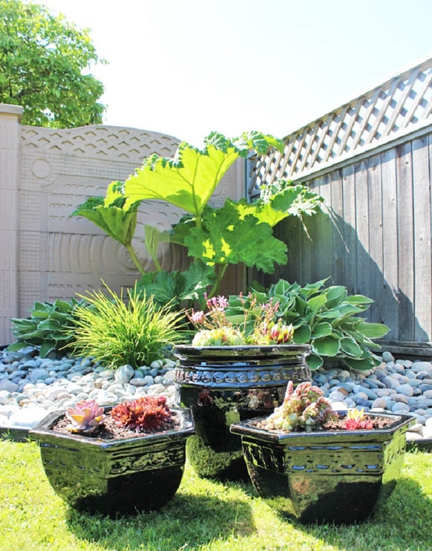 10 Outdoor Succulent Garden Ideas