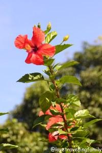 Spring in Viñales, Cuba