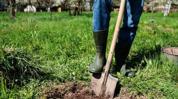 landscaping essentials