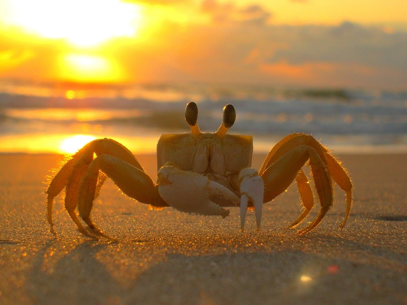 crab-loving-beaches