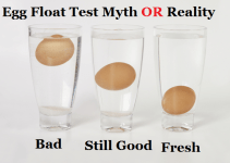 egg floating test