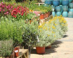flores loving lavanda talleres