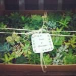 Plantas de regalo para los invitados a la boda