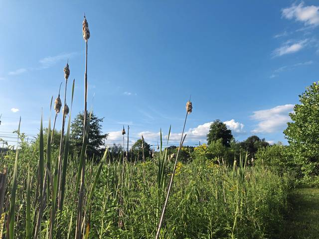 The wetlands area at Murrysville Community Park is home to a wide variety of native plants and wildlife.