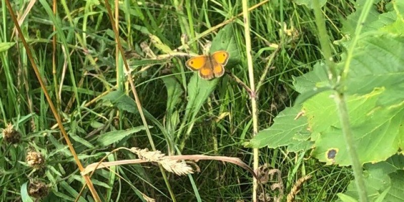 Gatekeeper at Kingfisher Corner 21072020