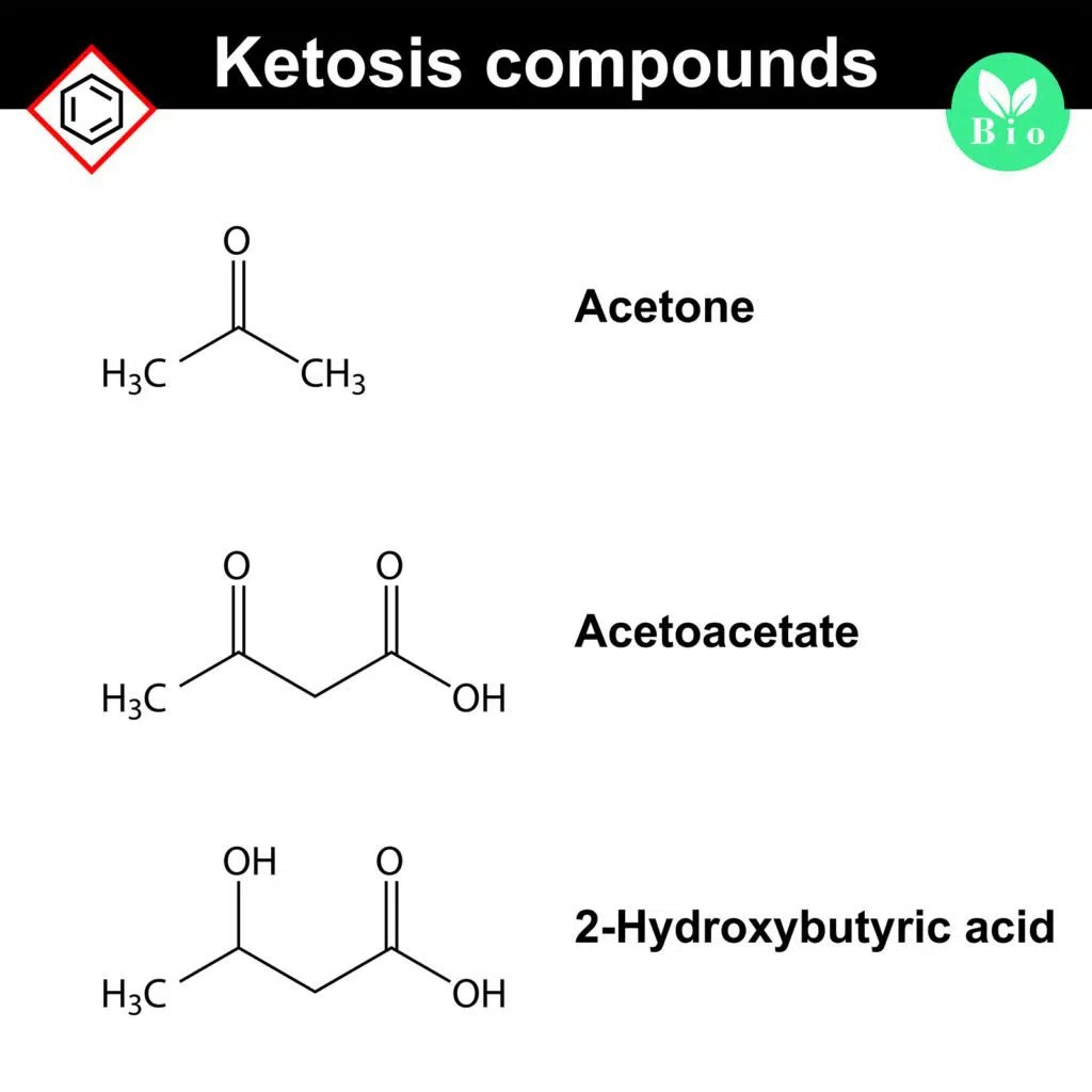 What Is A Ketogenict What Is Ketosis Absolute