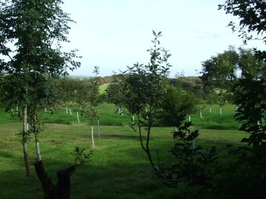 pic 14 surrounding trees and countryside