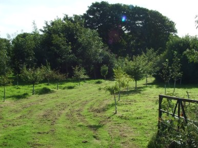 pic 6 surrounding trees and countryside