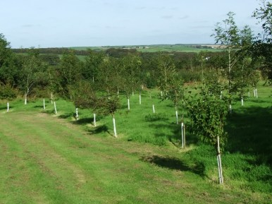 pic 8 surrounding trees and countryside