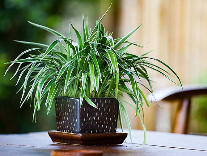 A Guide To House Plants Lowe S Canada