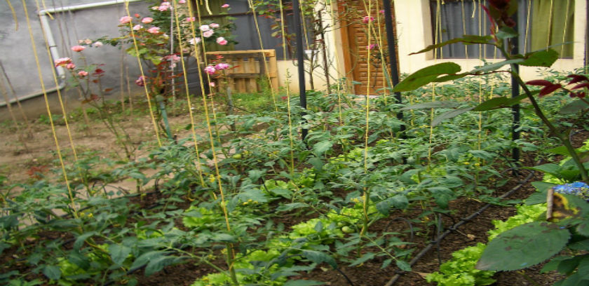 Drip Irrigation For Your Home Garden Low Flow Sprinkler Pros