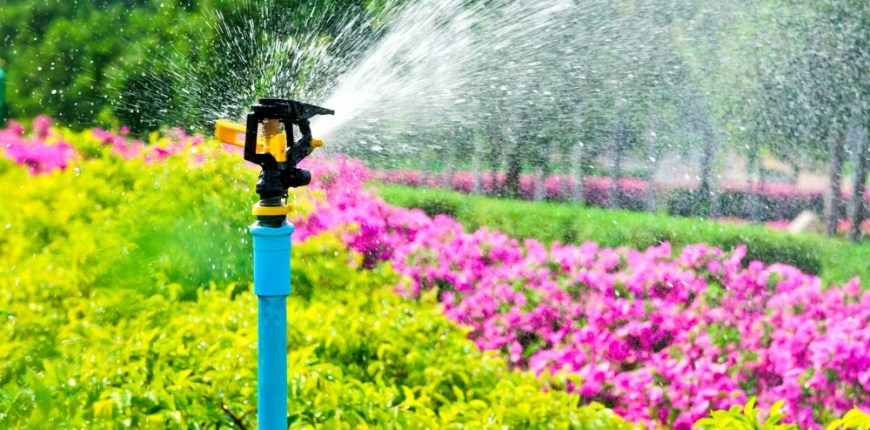 Hose or Sprinkler System: What's the Best Way to Water?