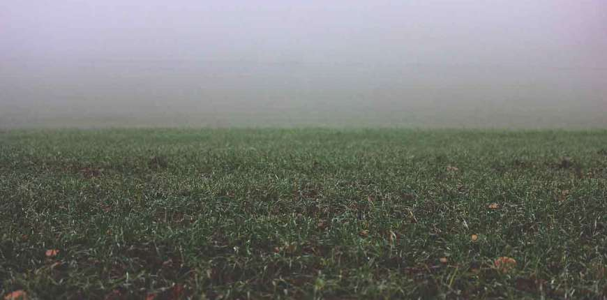 Does Grass Go Dormant in Winter? And Other Winter Lawn Questions