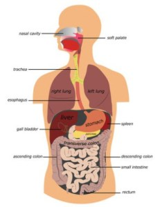 Difference Between IBS and IBD
