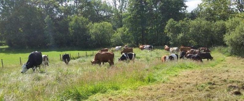 nature friendly farming low sizergh