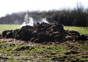 steaming-pile
