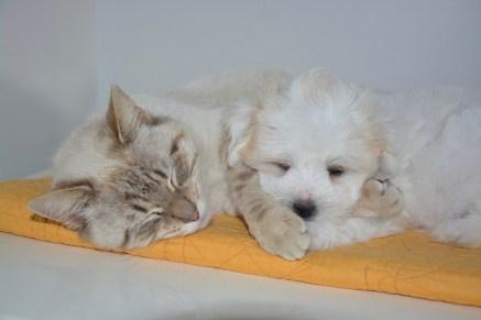 cat-2205051_640