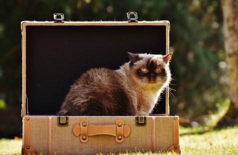 cat-2149809_640