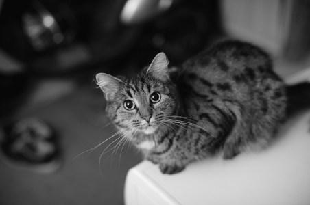 female-cat-1108621_640