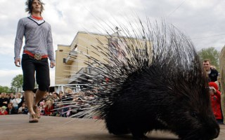 The Porcupine and the Senior Police Officer