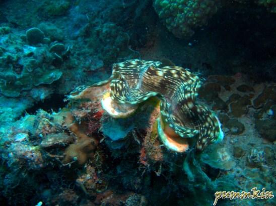 giant clam 2