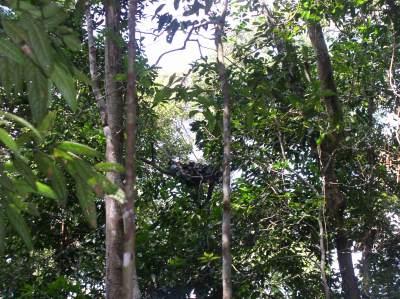The orangutan nest we spotted.