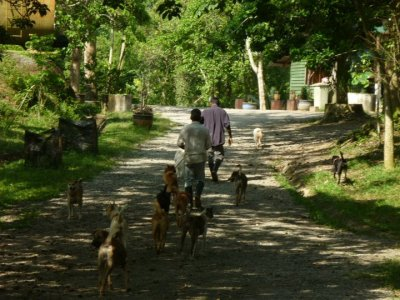 Walking The Dogs | Credit: Bentong Farm Sanctuary