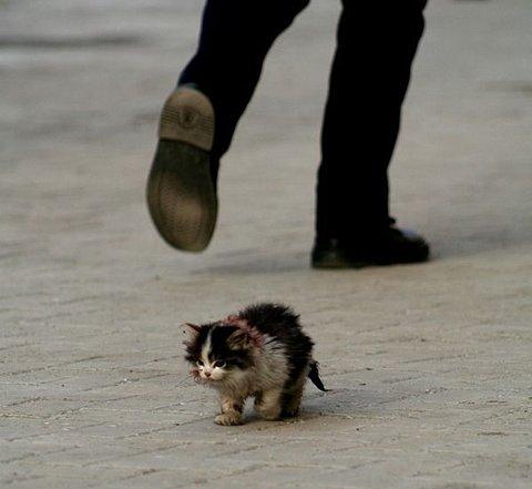 Saddest Cat. Please Be Gentle. | Credit: http://www.flickr.com/photos/emptysound