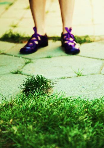 Damn, that grass sure looks green! | http://www.flickr.com/photos/pinksherbet