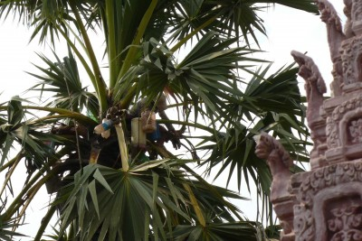 Palm into Palm Wine | Credit: June Rubis