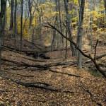 Niagara Escarpment Woods #8 Limited edition fine art photograph