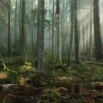 Tamara P Morning in a Dense Forest