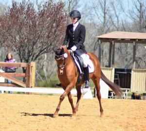 Is Dressage Going to the Ponies?