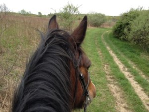 trail horseback riding nature therapy