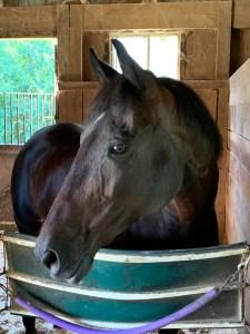 horse - mare -portrait - horse head -