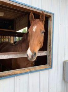 mare - dressage - horses