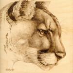 cougar-08-264x300