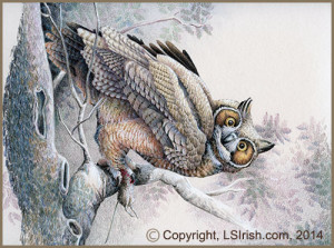 colored pencil Horned Owl project
