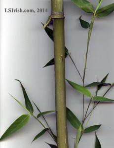 bamboo walking sticks