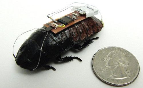 Una de las cucarachas Cyborg con el sistema de dirección eléctrico