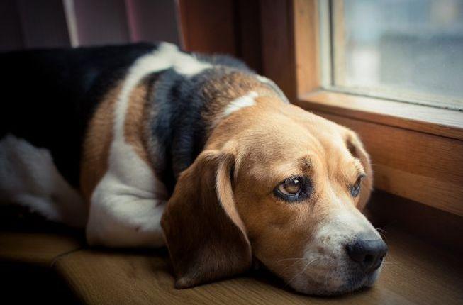 Sad-Dog 2