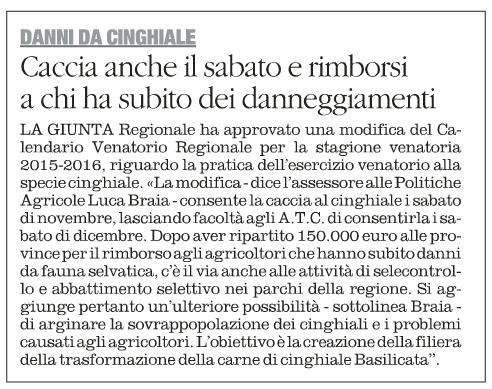 CINGHIALI quotidiano 1 11 2015