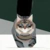 Gennaio2018 - IL NORVEGESE - norsk skogkatt - il gatto dei boschi. Pittura lavabile su legno 30x30.